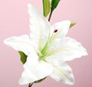 造花 カサブランカ 白
