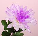 造花 菊 うす紫