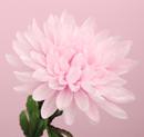 造花 菊 ピンク
