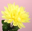 造花 菊 黄色