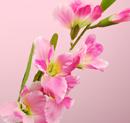 造花 グラジオラス ピンク