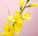 造花 グラジオラス 黄色