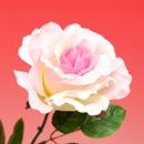 造花 シルクローズ ピンク