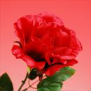 造花 シルクローズ 赤