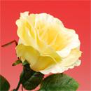 造花 シルクローズ 黄色