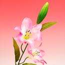 造花 タイガーリリー ピンク