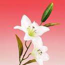 造花 タイガーリリー 白