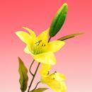 造花 タイガーリリー 黄色